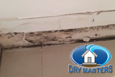Mold removal in Palm Beach Gardens